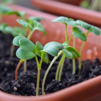 Semis réalisés dans la serre de jardin